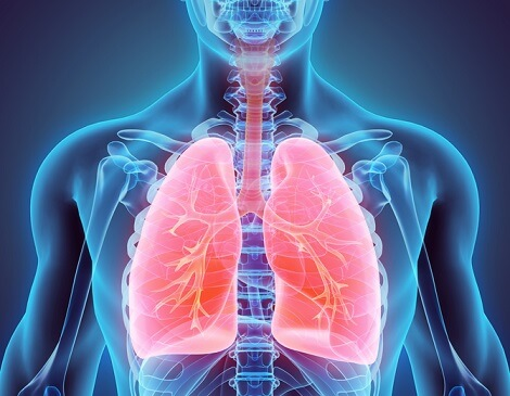 stock photo, lungs